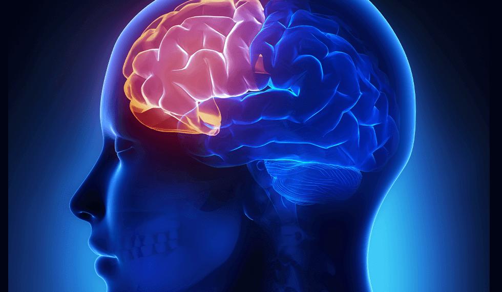 脳で一番老化が早い部位として前頭葉は、鍛えることができます。