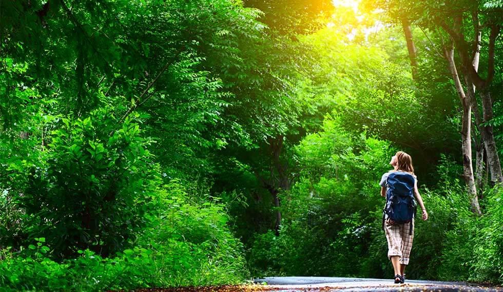 脳の疲労は森林浴で軽減できる。科学的に立証された森林浴には脳に良い要素が沢山あります。